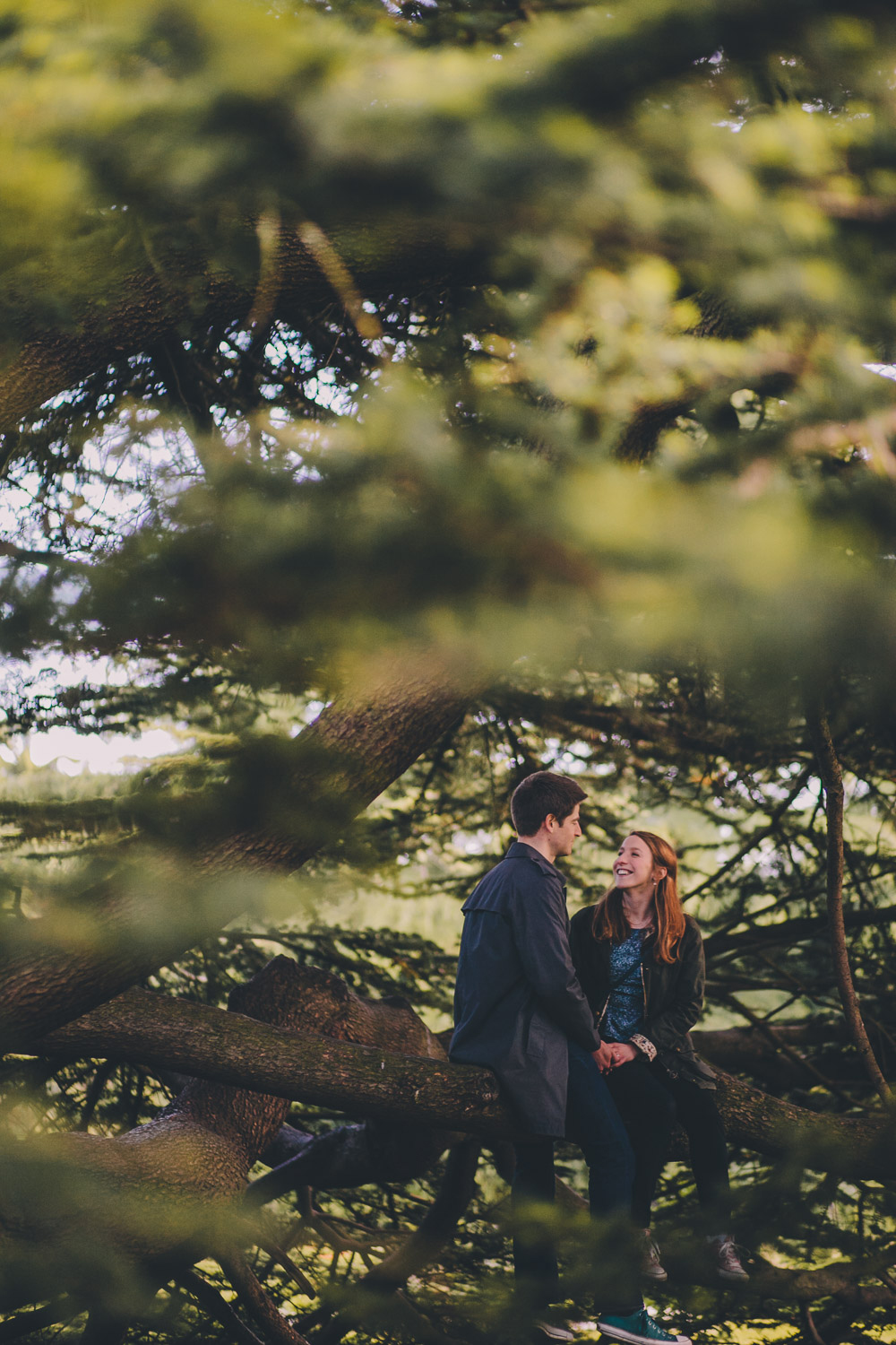 engagement shoot couple sitting in tree